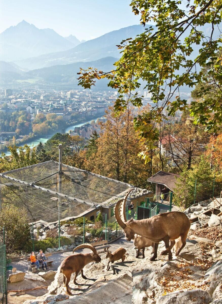 Dieren kijken in de Alpenzoo Innsbruck | © Innsbruck Tourismus / Christof Lackner