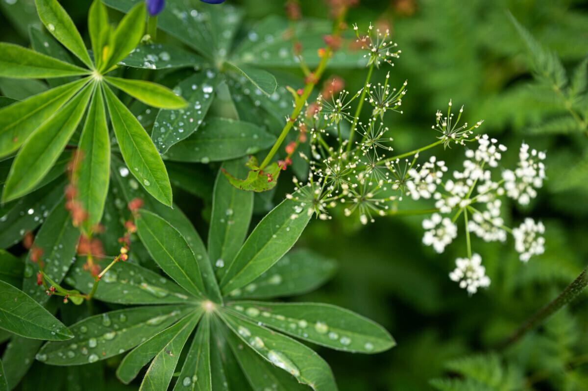 Druppels groene planten