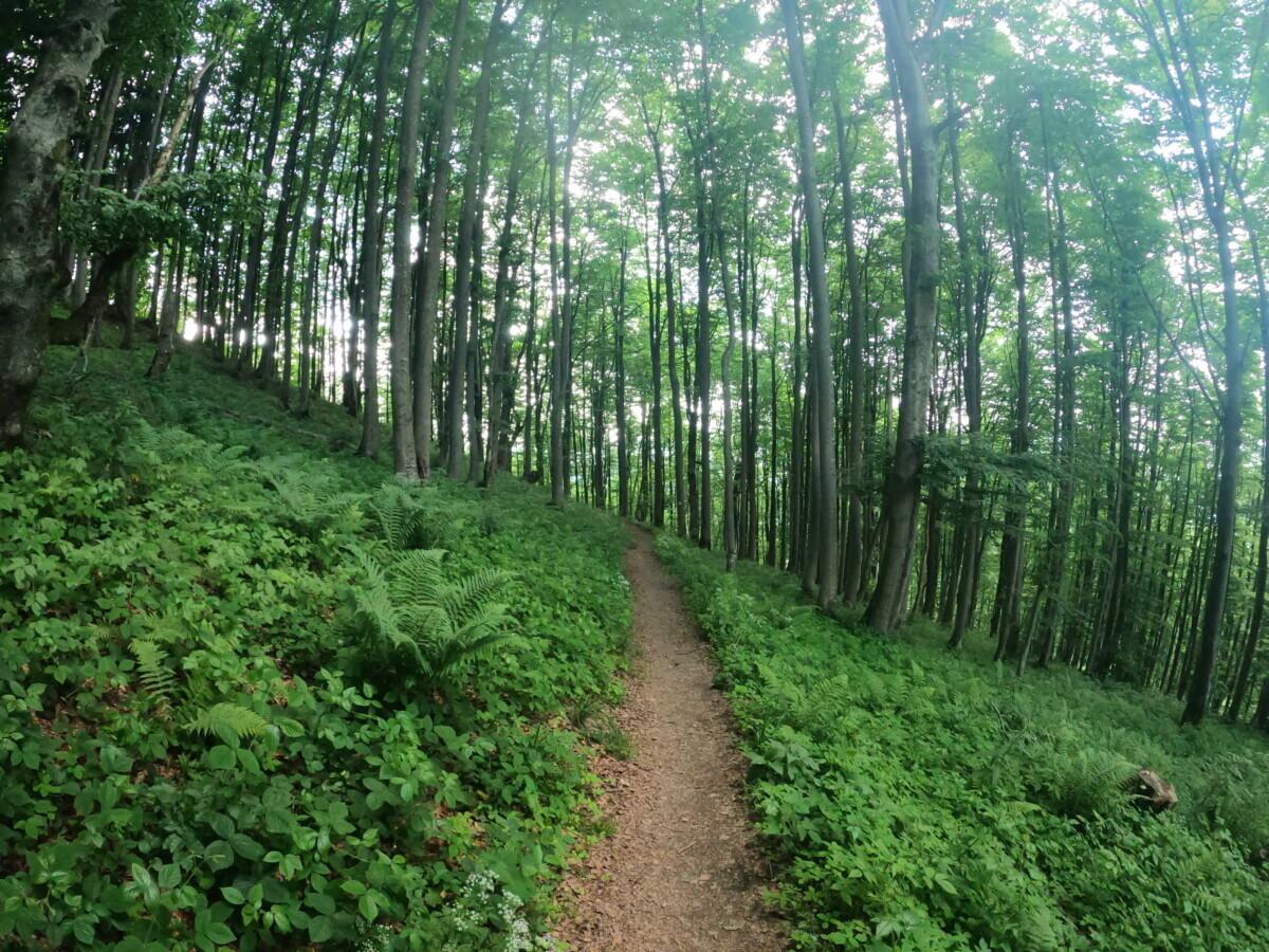 Bieszczady national park_Mountain Reporters_Rick Mulder_Ik Wil Hiken_03