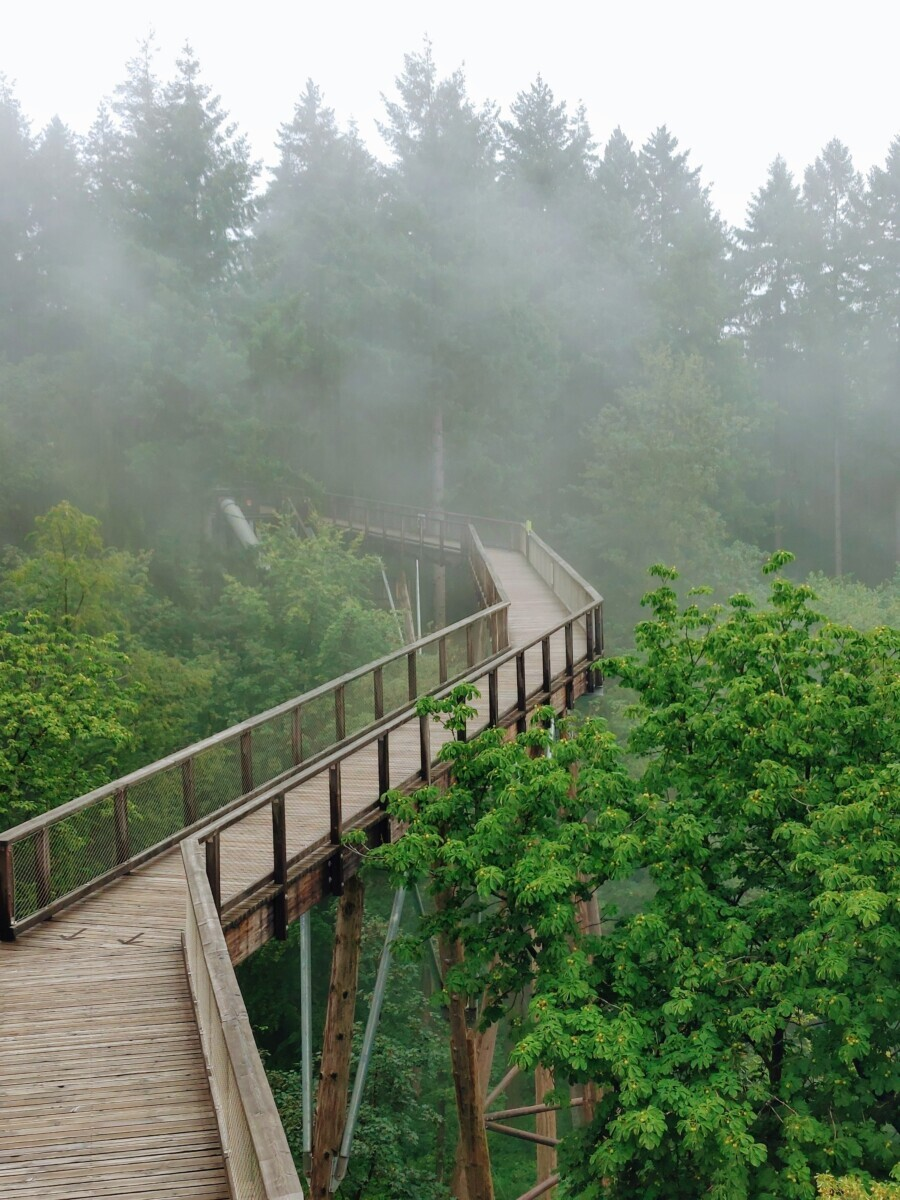 boomtoppenpad in de mist