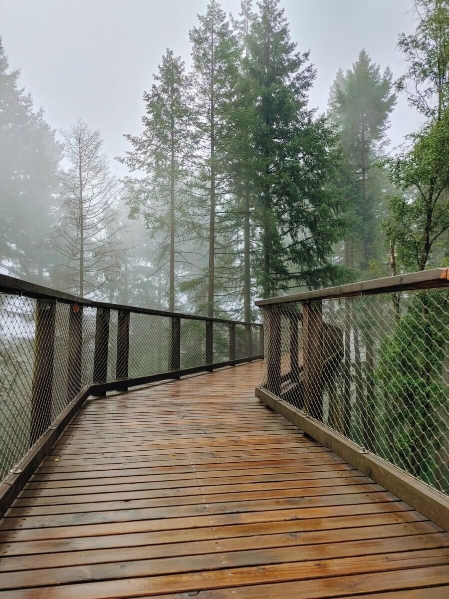 houten pad tussen de bomen door