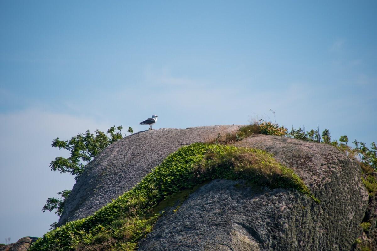 Zeemeeuw op een rots